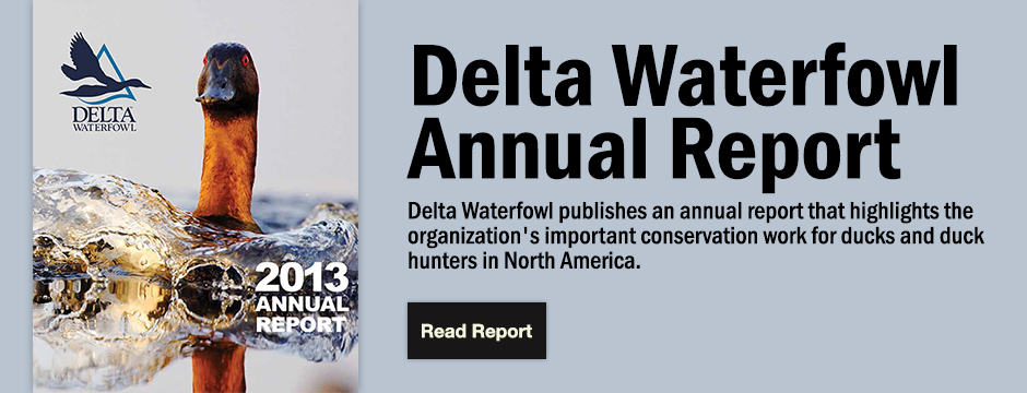 Delta Waterfowl Wallpaper Duck hunting organization