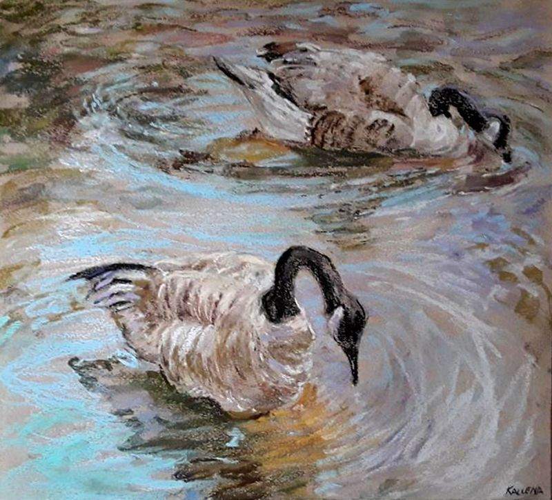 Sipping Geese Reflections