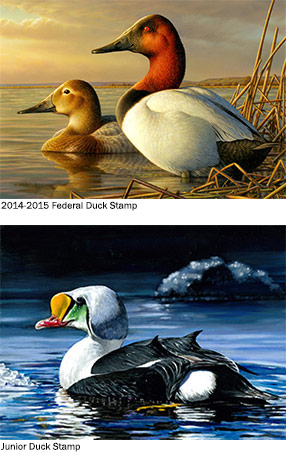 $15 Well Spent: Duck Stamp Sales Open Today