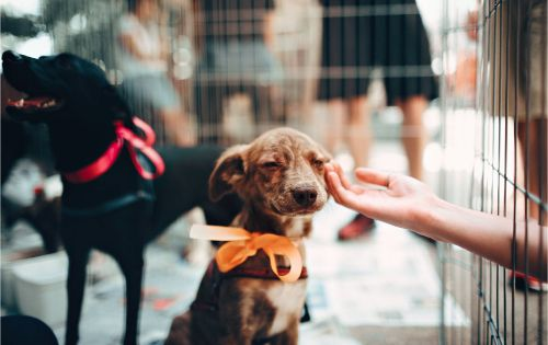 Five Reasons Why You Should Adopt a Mutt