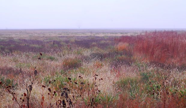 Colors and contrast on the prairie