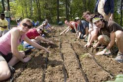 Volunteer group planting onions
