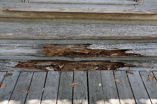Damage to Logs - 2011