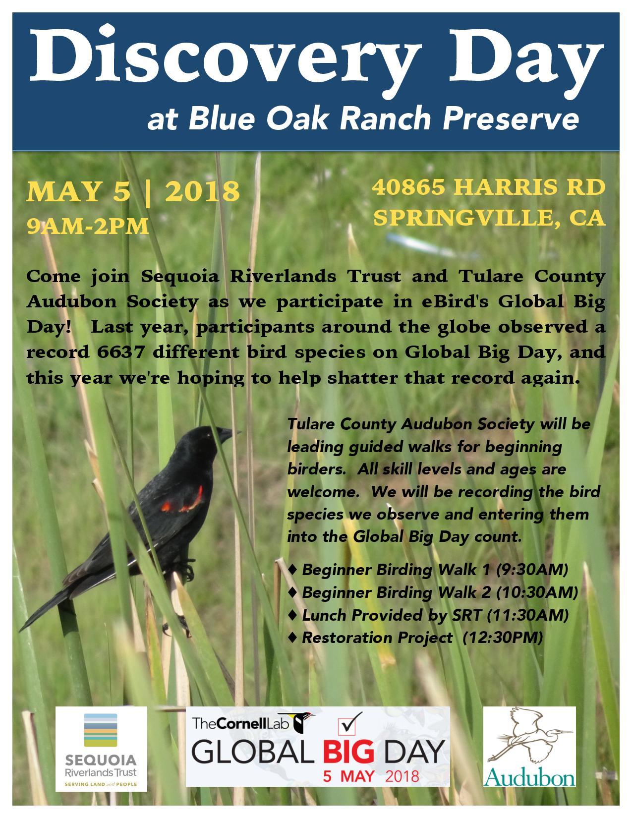 Birding at Blue Oak