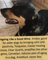 Ageing Like a Good Wine Dog Charm