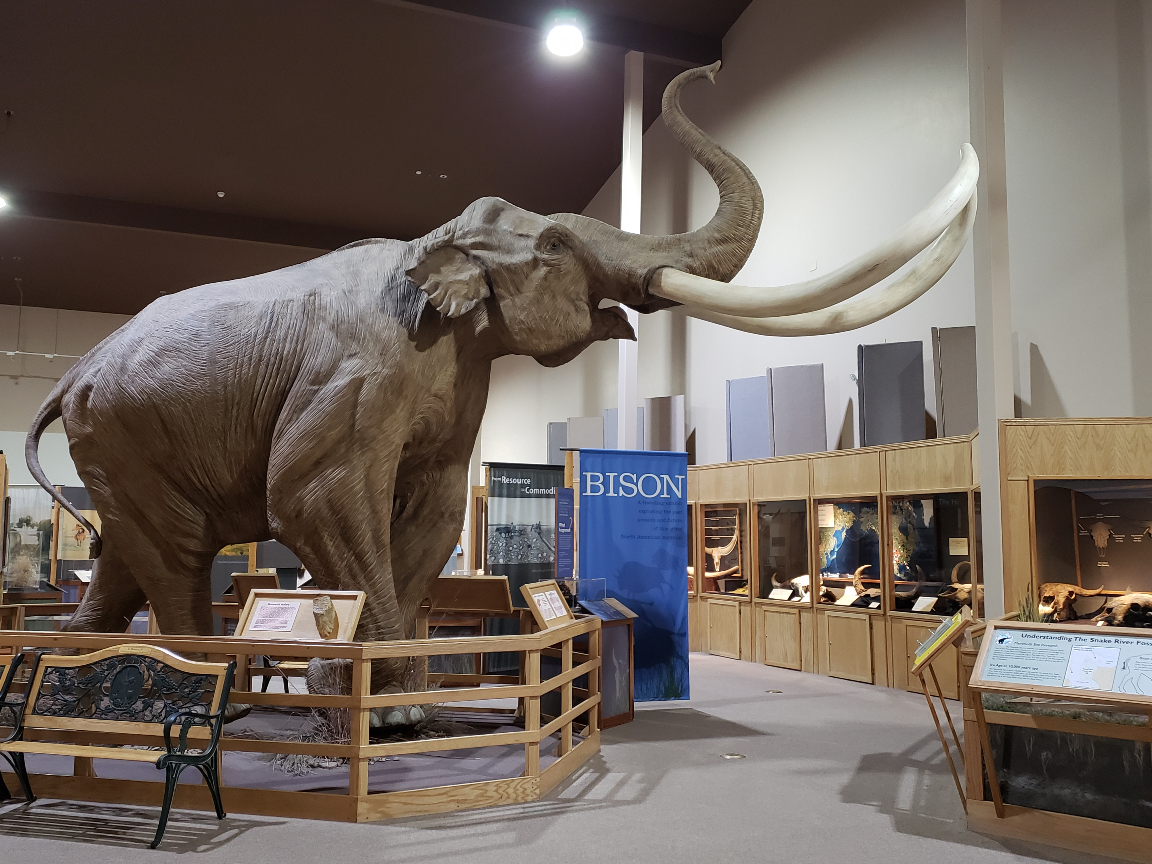 The Mammoth Site Welcomes a  New Temporary Exhibit