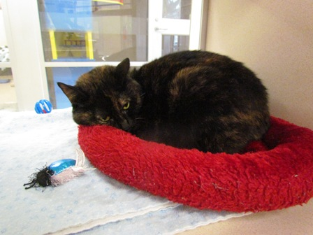 Bug--Meet her at the Petco on 56th & Hwy 2