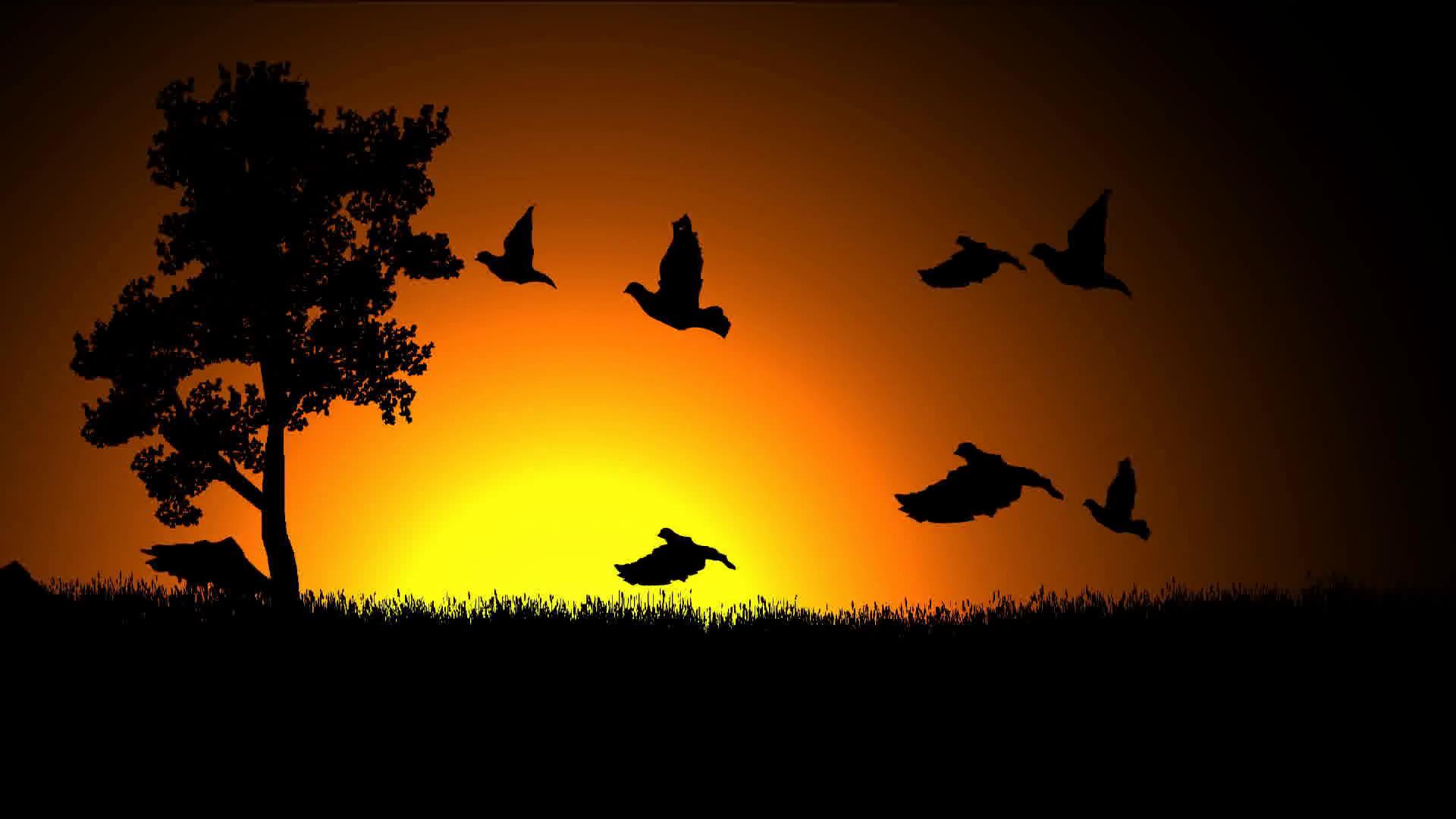 Help Save Wild Bird
