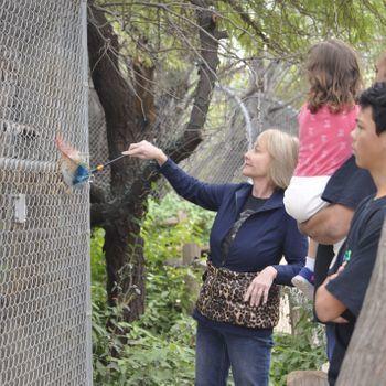 Volunteer white nosed coati Southwest Wildlife