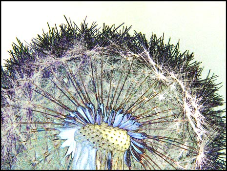 A close up look at herbs