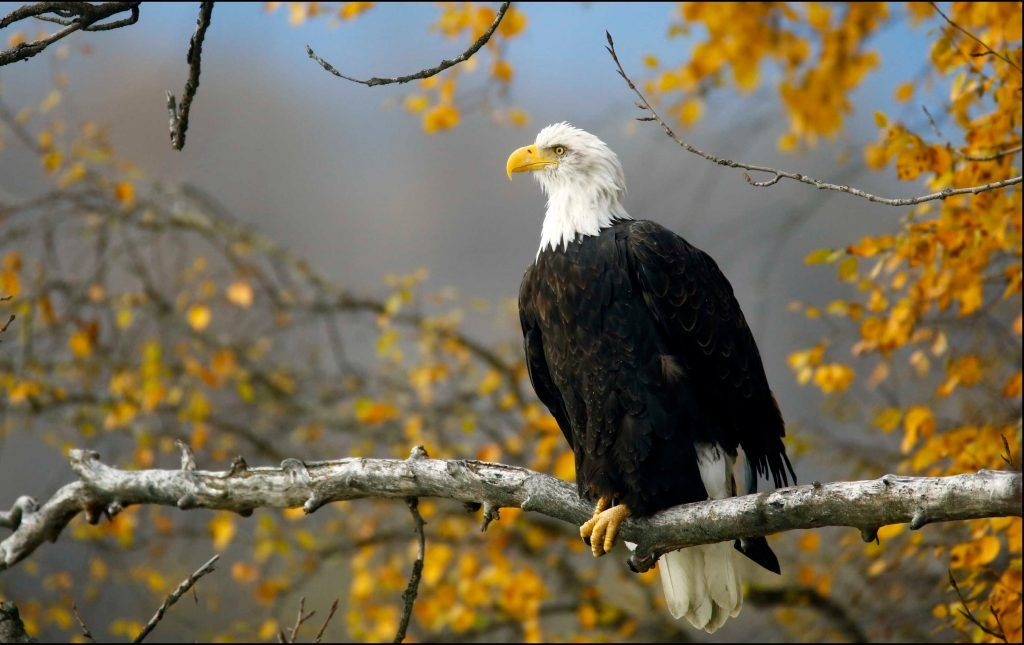 Trump Administration Eviscerates Endangered Species Act, Defying Biblical Stewardship