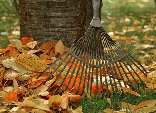 Fall into Volunteering this Autumn