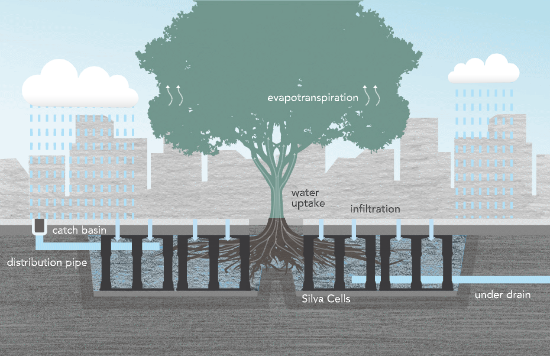 BMPs Pave the Way for Urban Forest Success