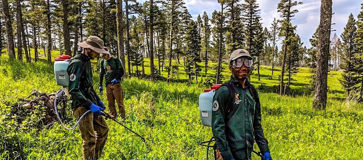 Black young adult man and two Caucasian young adult men with sprayers and protective eye wear, and long sleeve MCC shirts  spraying for weeds in a mountainous setting with several pine trees