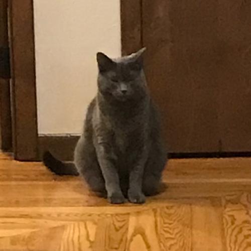 LOST: Cat (Eddue)