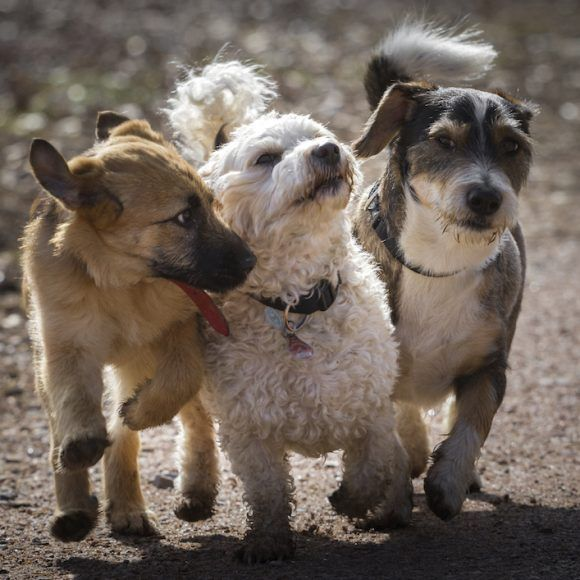 Doggie Play Date