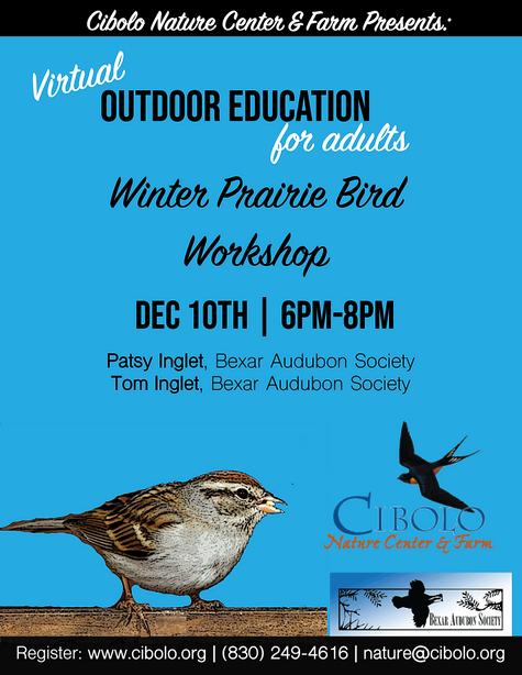 Virtual Workshop: Winter Prairie Bird Workshop