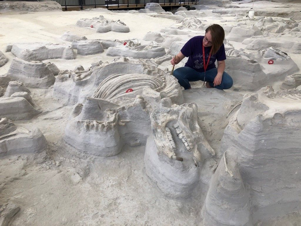 Fossil Finds in Volcanic Ash