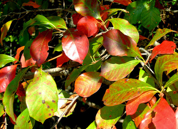 Soup 'n Walk: Dazzling Fall Color