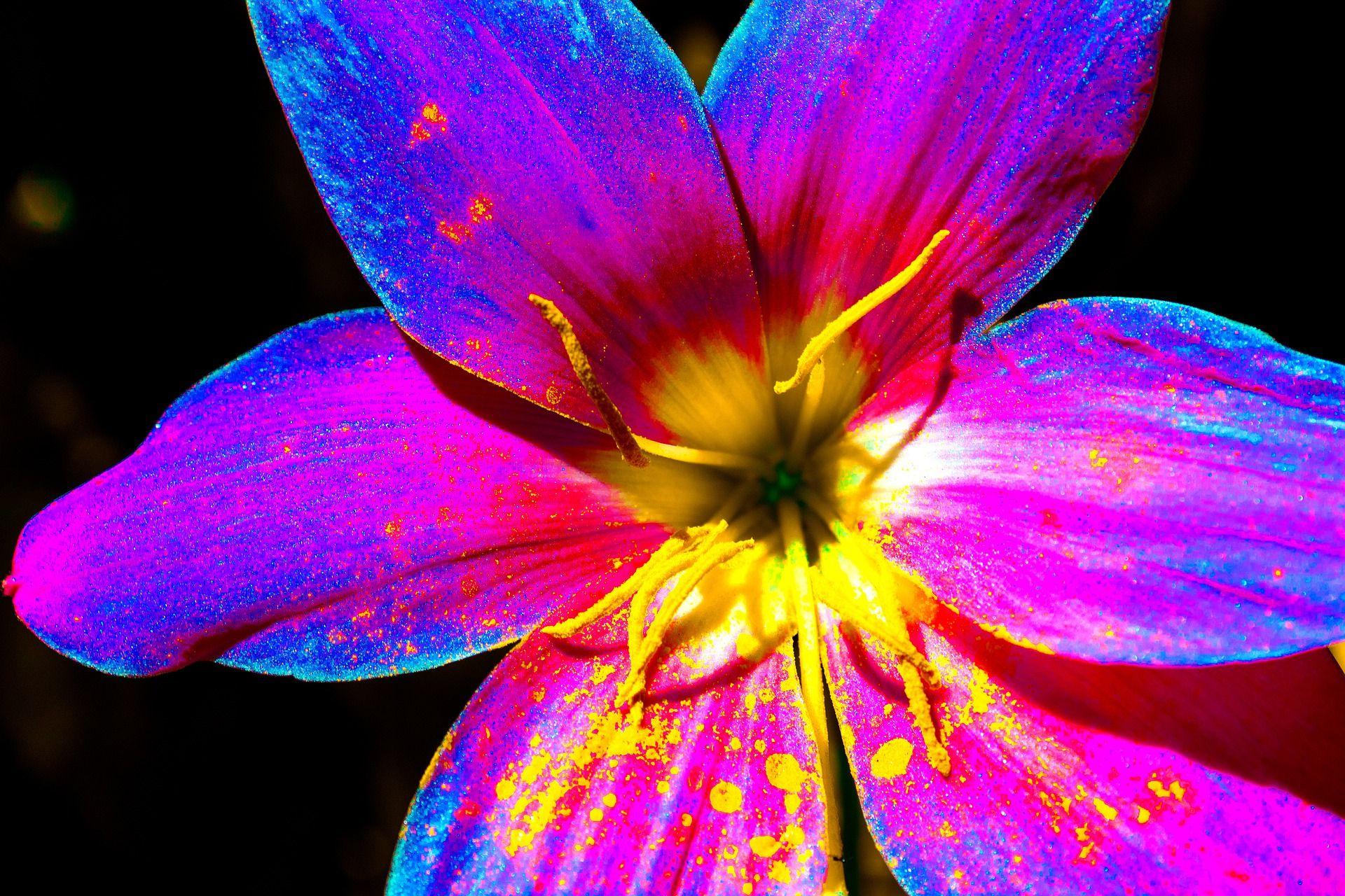 Vibrant! Colorful! Creative!
