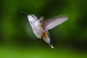 PollinatorLIVE
