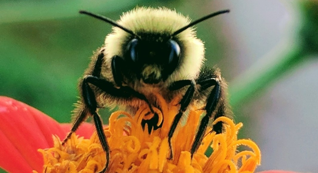 Learn about pollinators July 14, 21, & 28