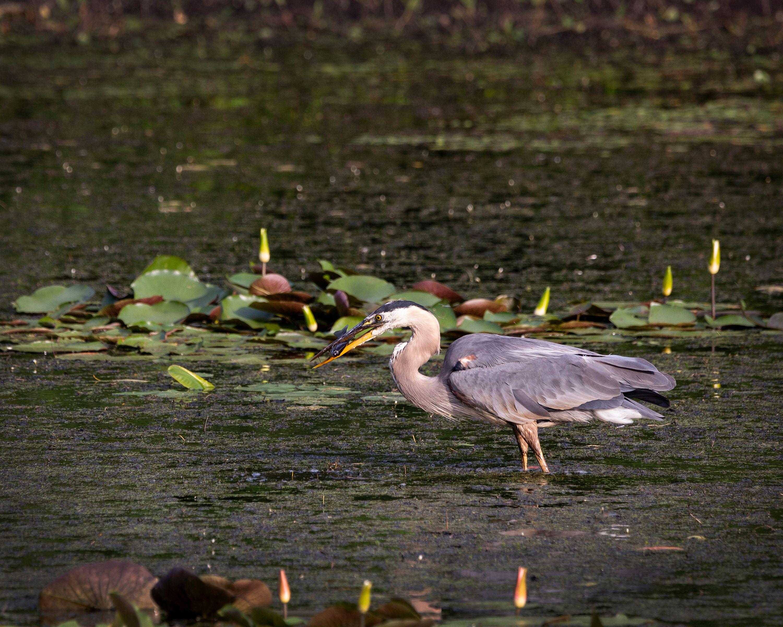 123rd Audubon Annual Meeting