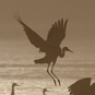 Crane Trust Nature & Visitor Center