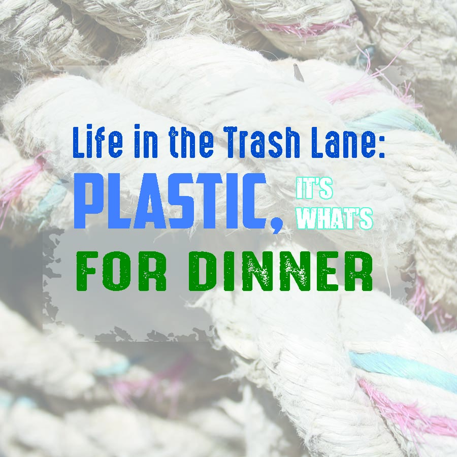 Plastic, It's What's For Dinner
