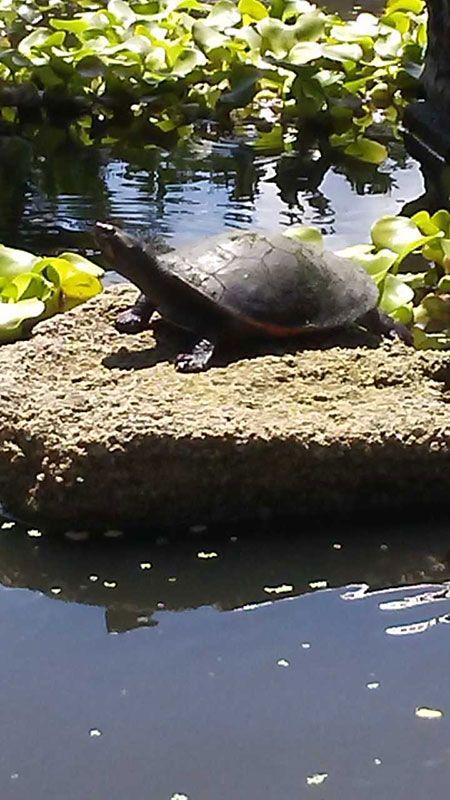 New Turtle Friend