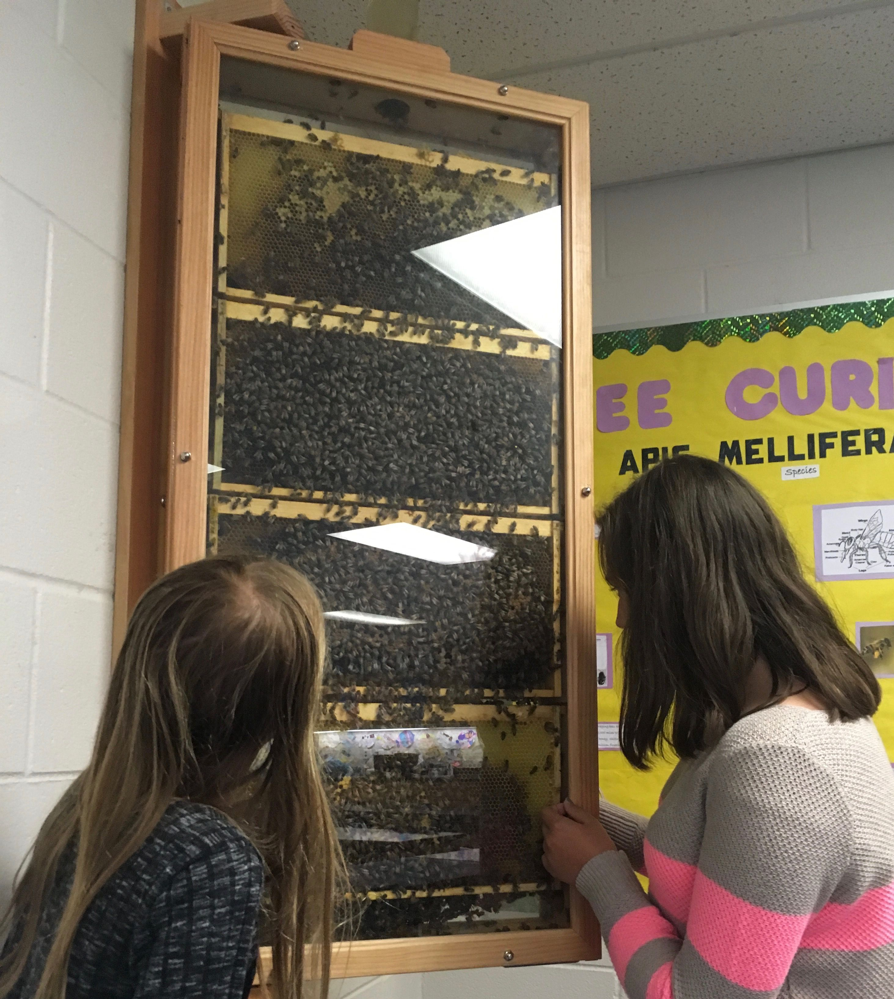 Foundation Grant Has Middle School Science Classrooms Buzzing (in a quiet, contained way)