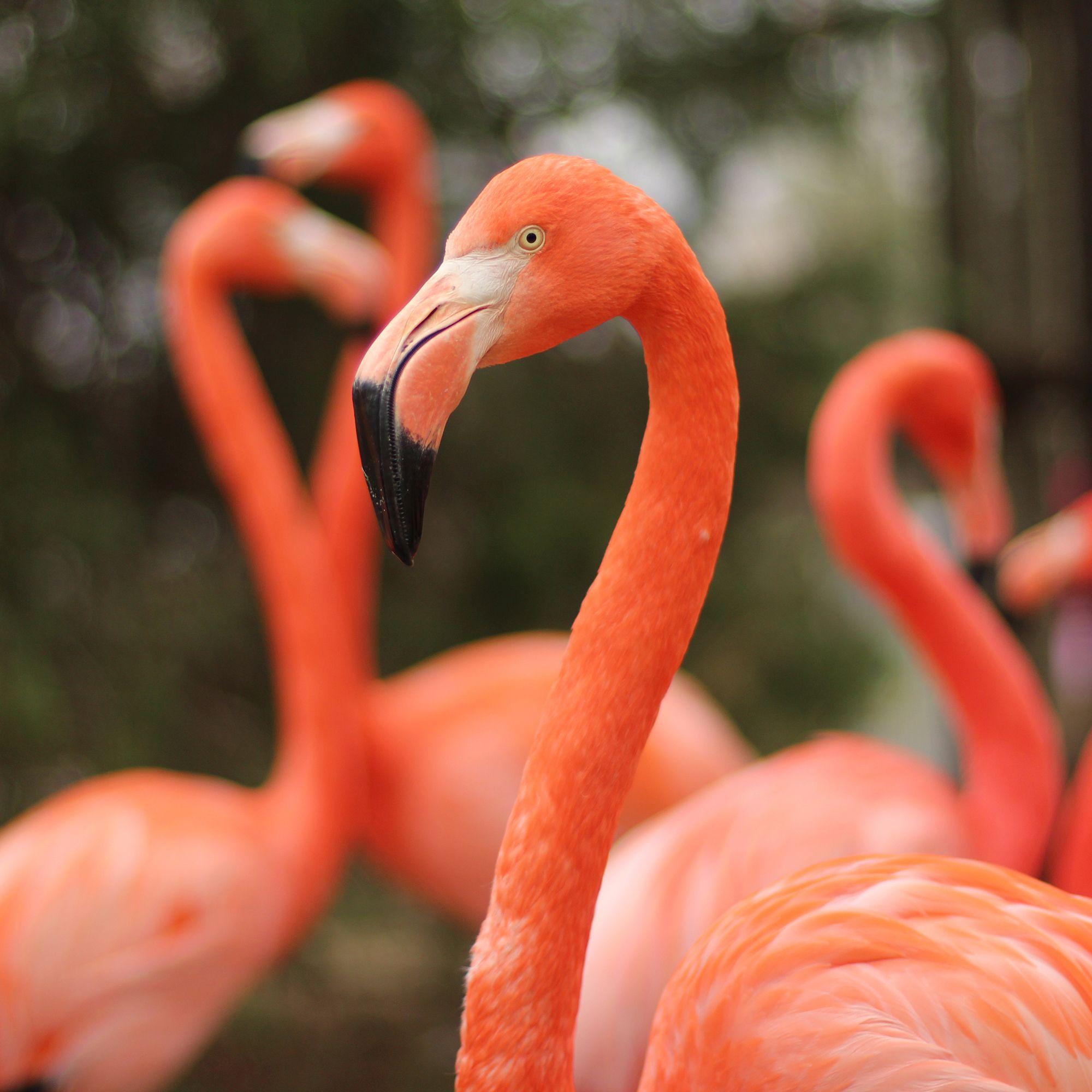 Tortuga the Flamingo