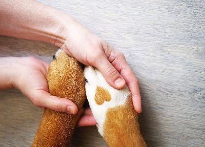 Mascotas para Adopcion