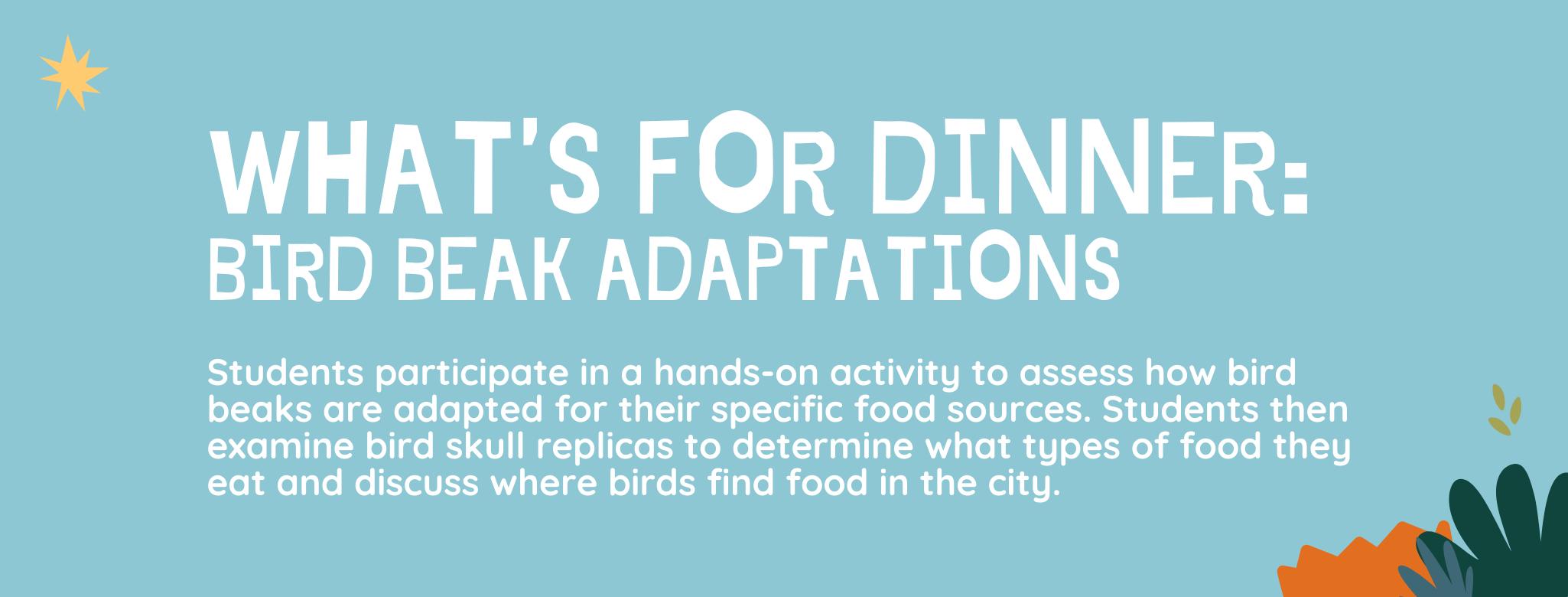 What's for Dinner? Bird Beak Adaptations