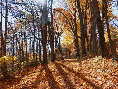 Autumn Leaf Peeping and Luncheon