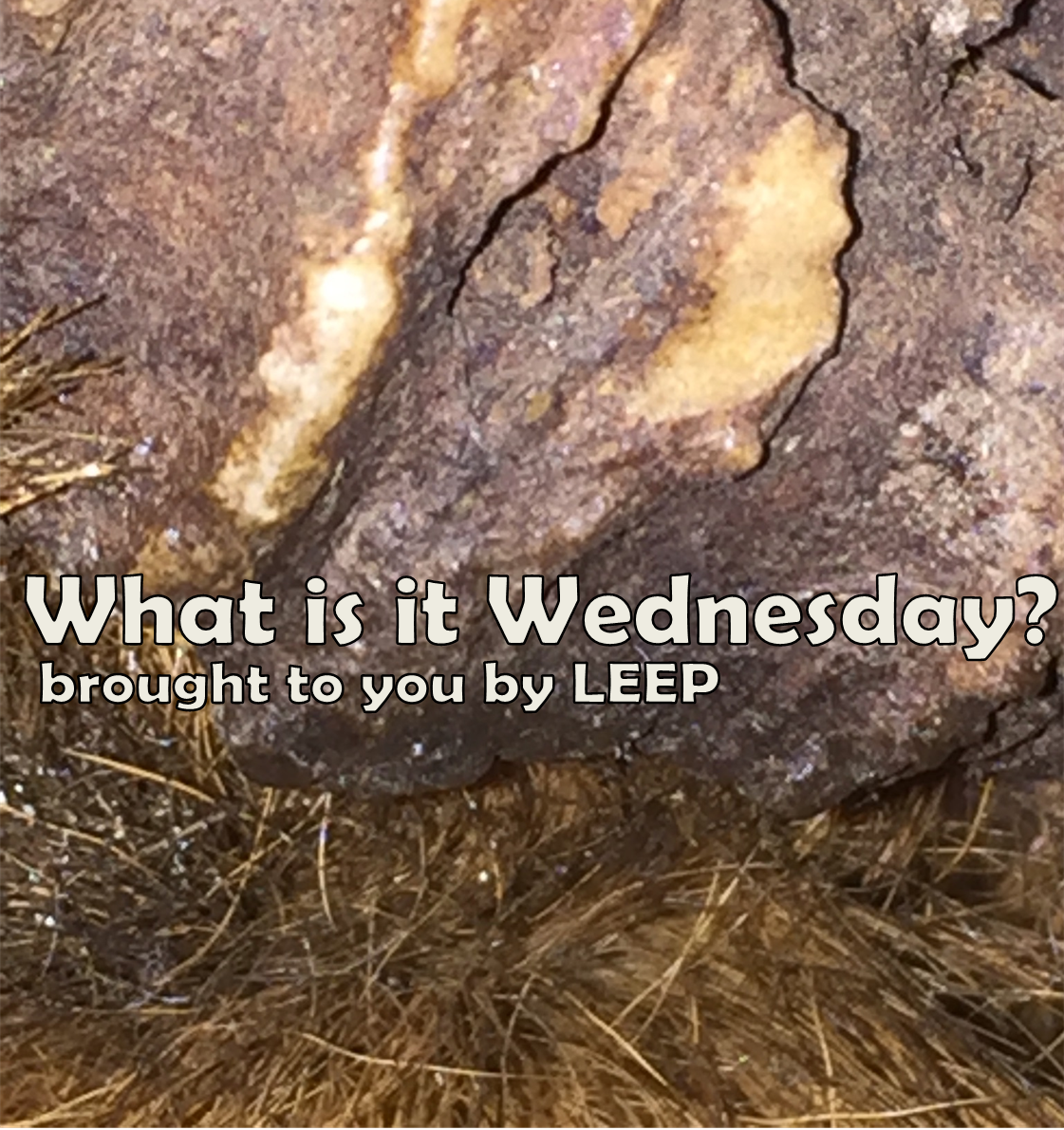 What is it Wednesday?