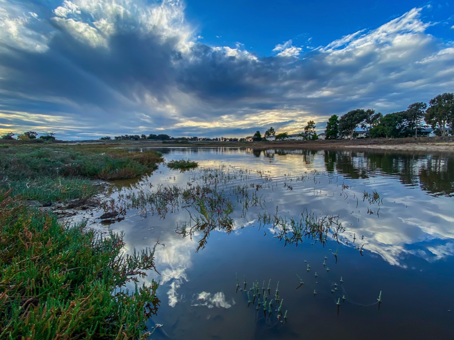 Webinar - Drawing ReWild Parallels with Wetland Restoration in Santa Barbara County