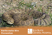 Rattlesnake Bite Prevention