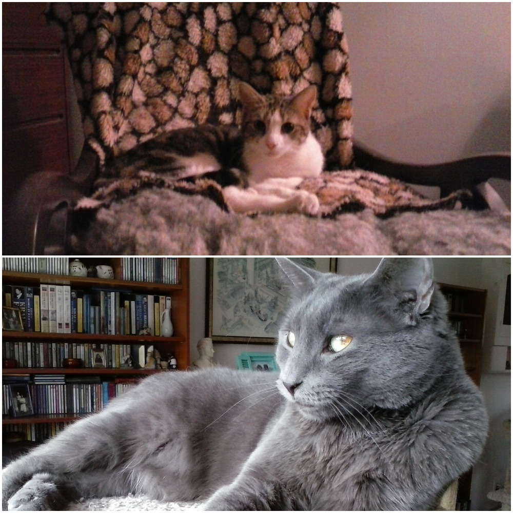 11/4/19: Mistletoe (Hayleigh)& Jessa (Francesca)