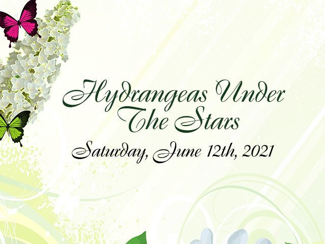 Hydrangeas Under the Stars