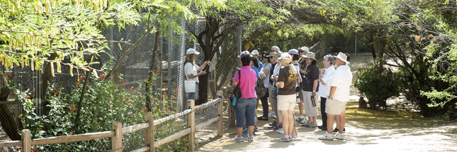 CANCELLED 12:30pm  Walk With Wildlife Tour