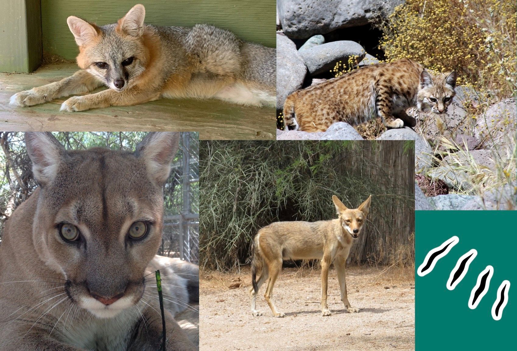 Wildlife Weekly: For Your Protection