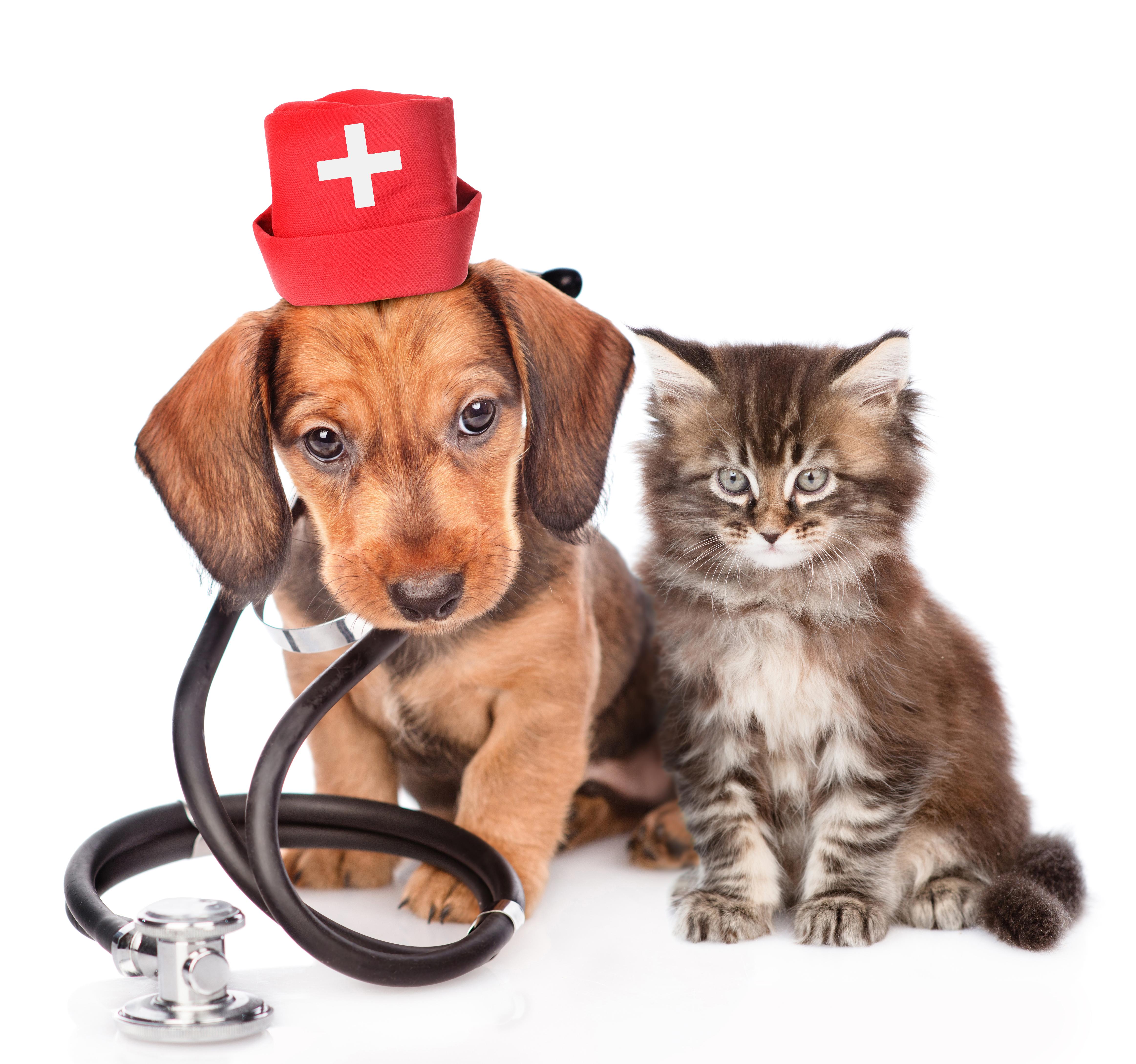 Vaccine & Microchip Clinic