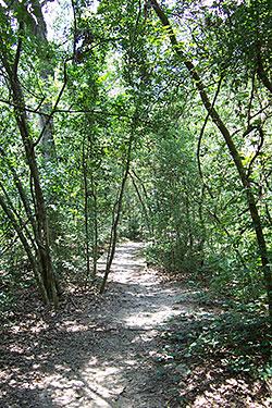 Edith Moore trail