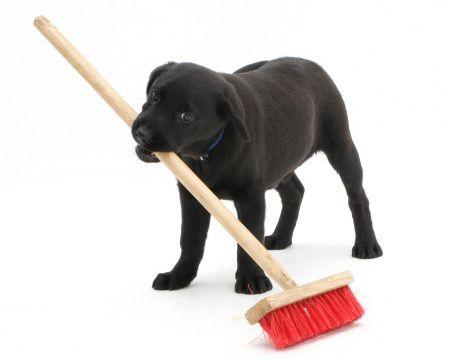 Trash Wrangler/Broom Tamer