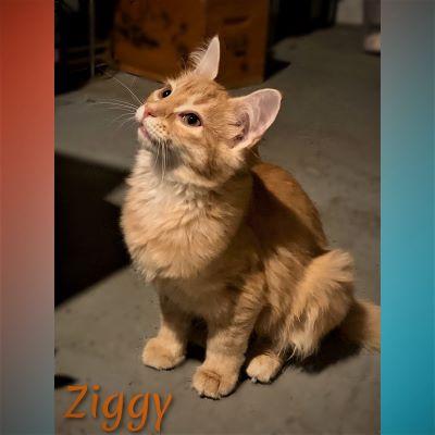 Ziggy- Adoption Pending