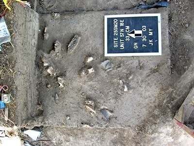 Bones and artifacts