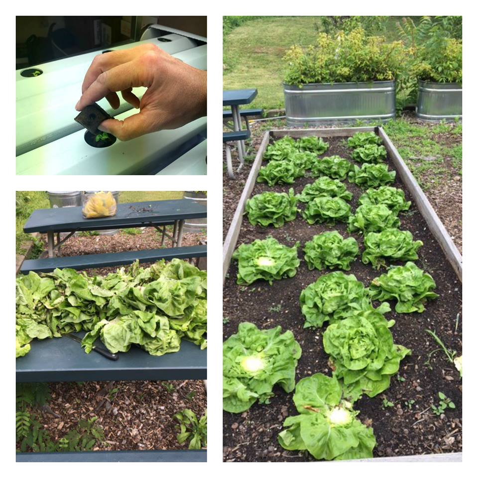 Hydroponic and Outdoor Garden