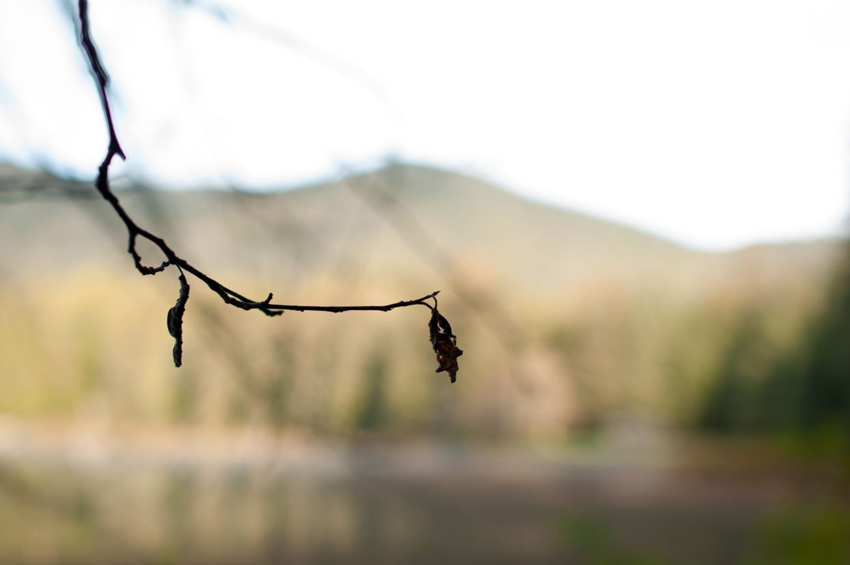Ward Lake 2, Branch Silhouette with Mountain