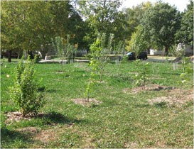 Food Forest 2011 2